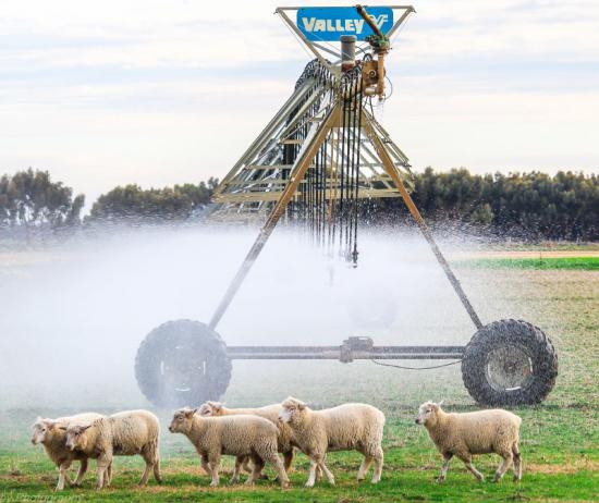 Pivot, Linear & Universal  Irrigators